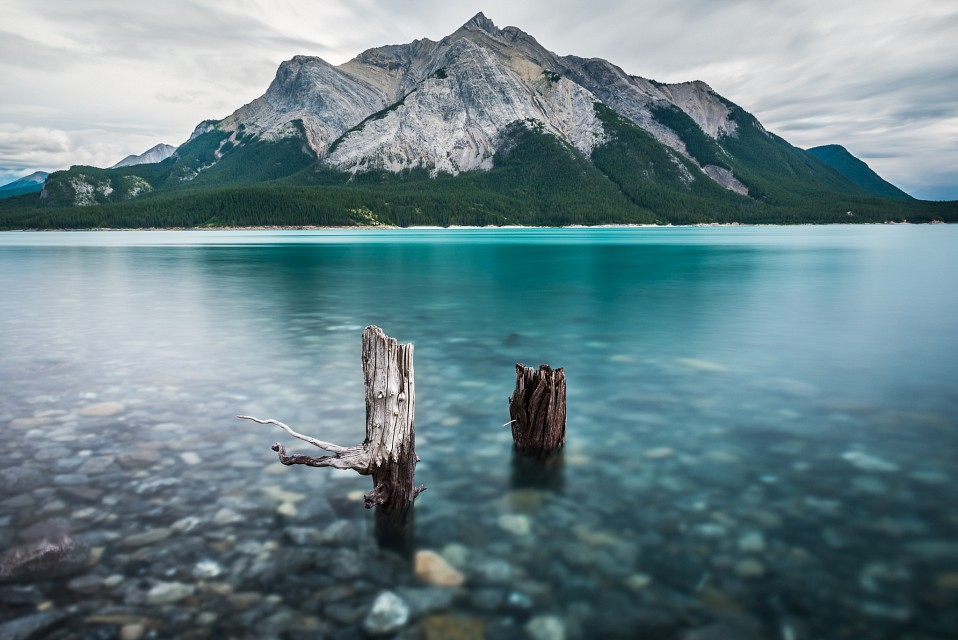 Once a Tree on a Hill - Abraham Lake