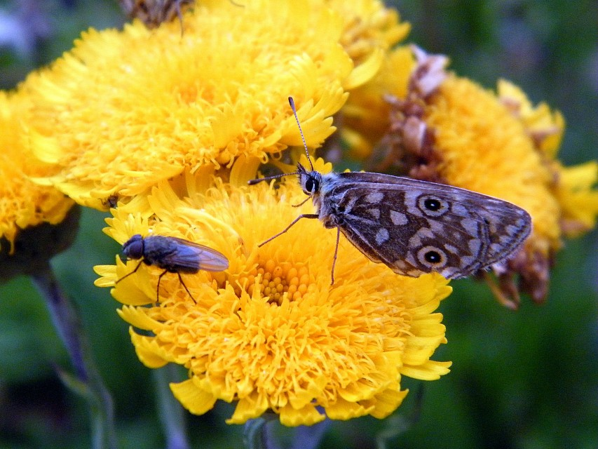 Alpine summer and insects abound - Alpine National Park