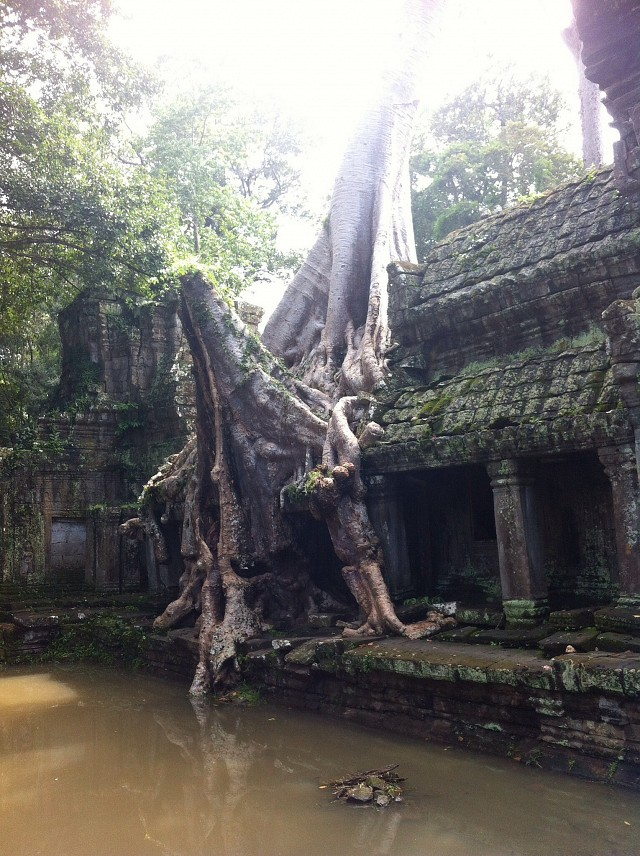 Cambodia - Siem Reap, Angkor Archaeological Park - Angkor Archaeological Park