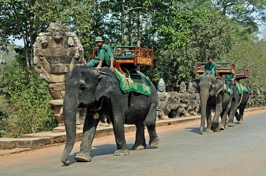 Elephant Ride. Elephants may not be treated well out of visitors' sight. - Angkor Thom