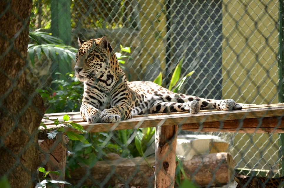Ardastra Gardens, Zoo, and Conservation Center in Nassau, Bahamas - Ardastra Gardens, Zoo and Conservation Centre
