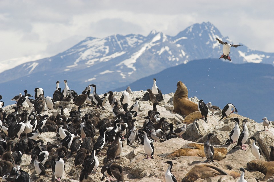 Beagle Channel Wildlife and Sights - Beagle Channel