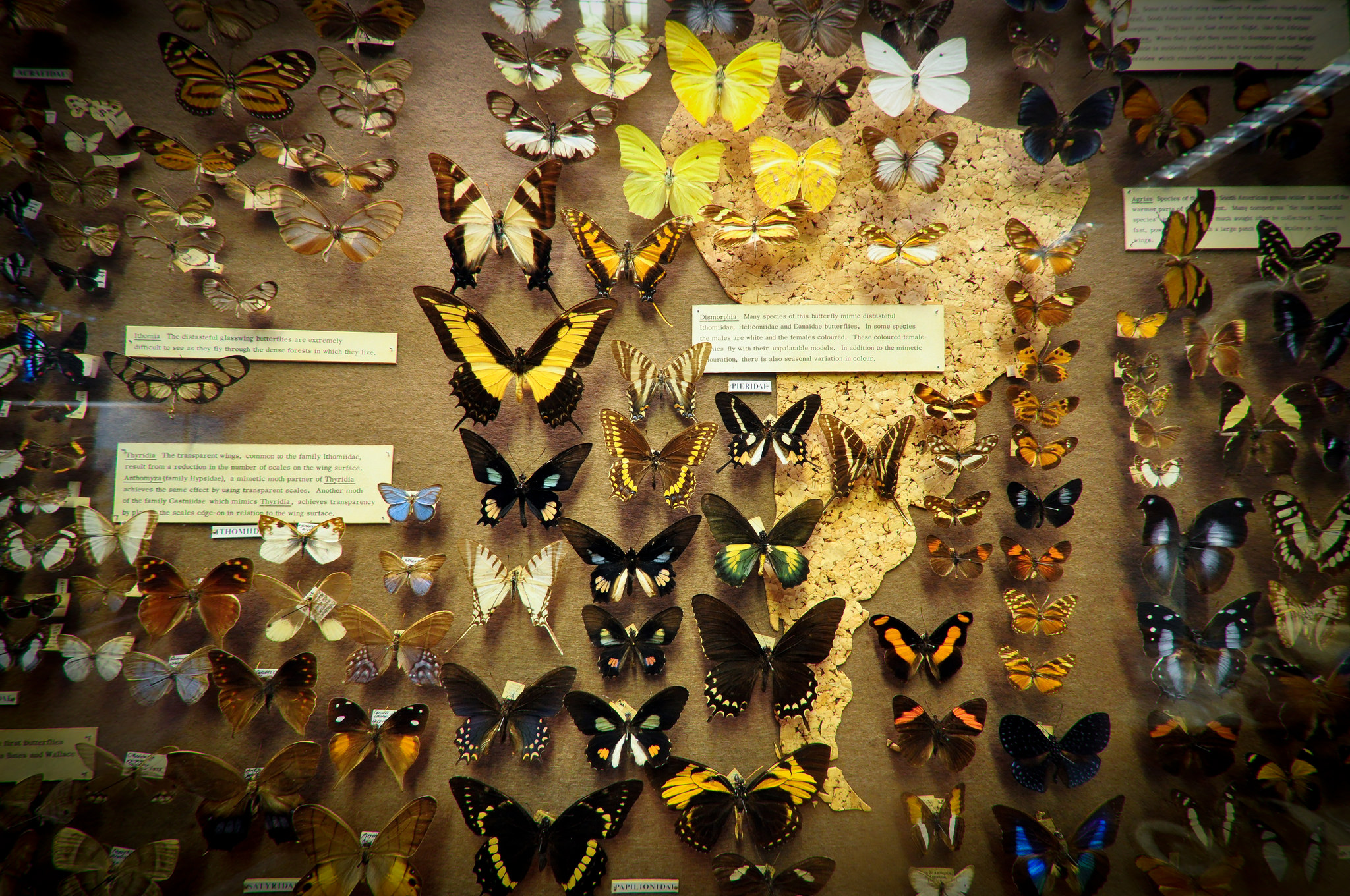 Wonders Of Museum Of Natural History