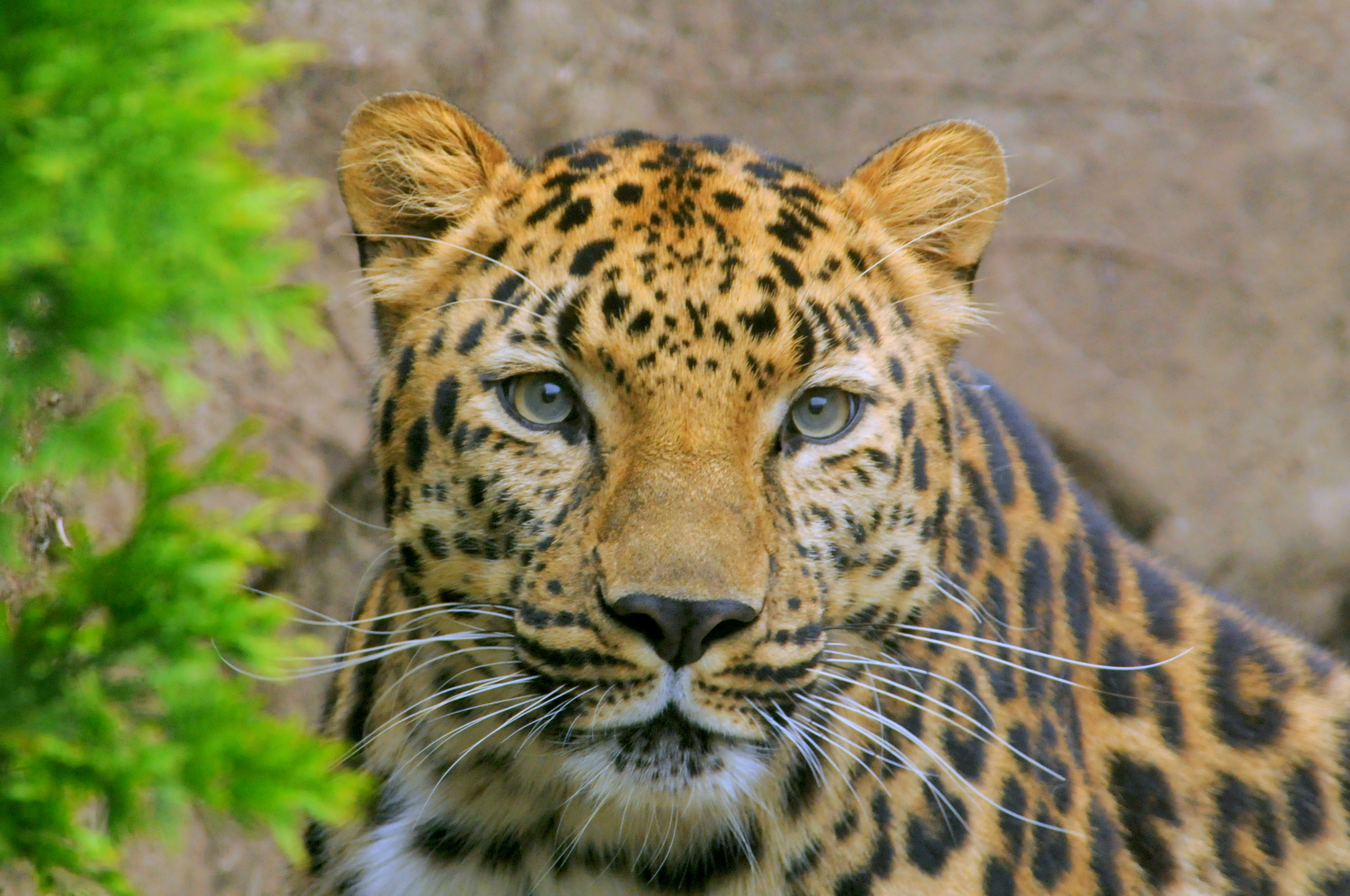 Brookfield Zoo - Zoo in Chicago - Thousand Wonders