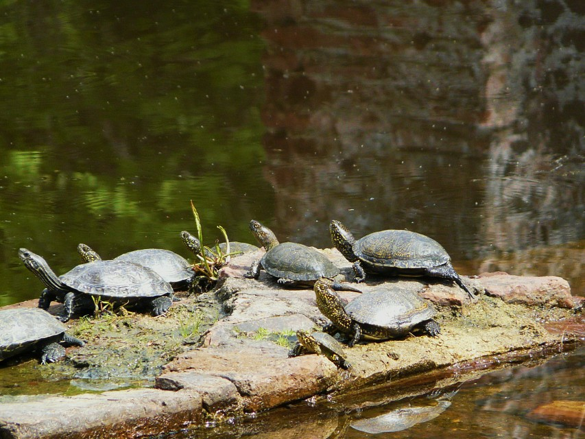 Turtles - Butrint National Park