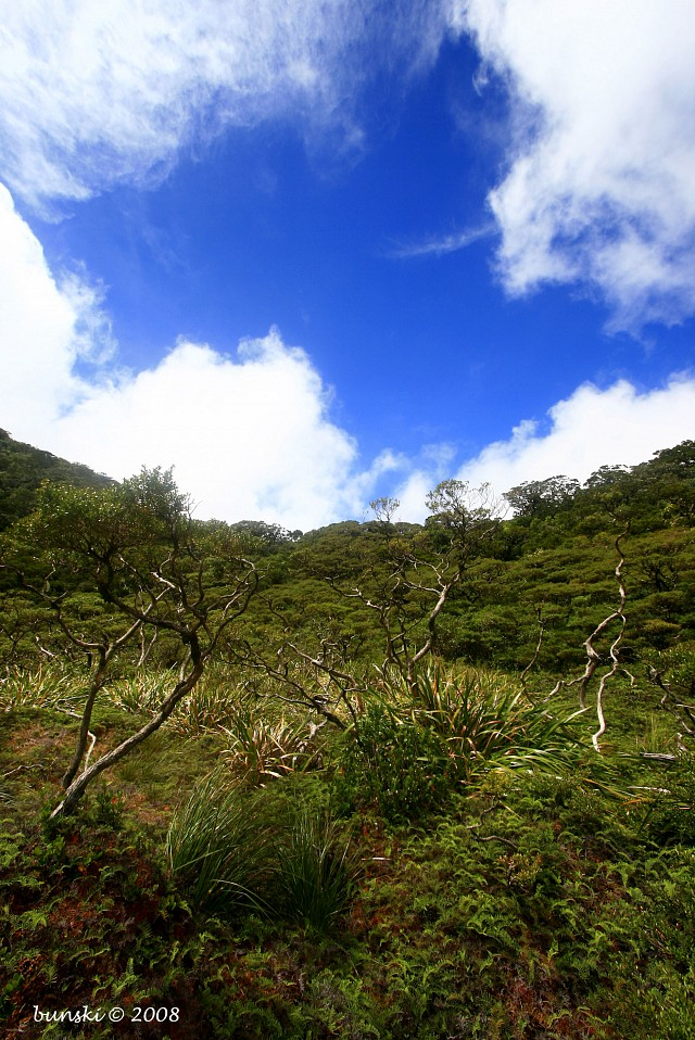 On Wasay Trail - Canlaon Volcano
