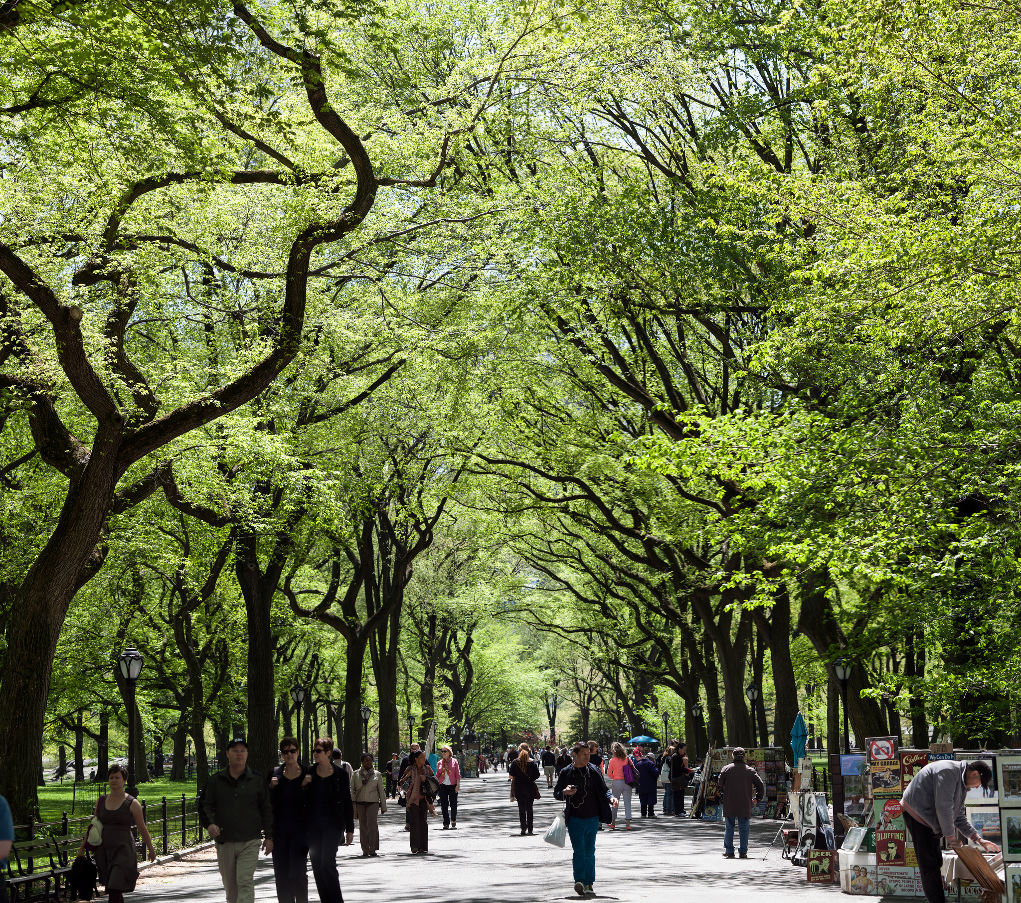 Cetral Park: Urban Park In New York City