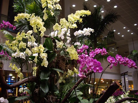 One of the many Orchid Garden