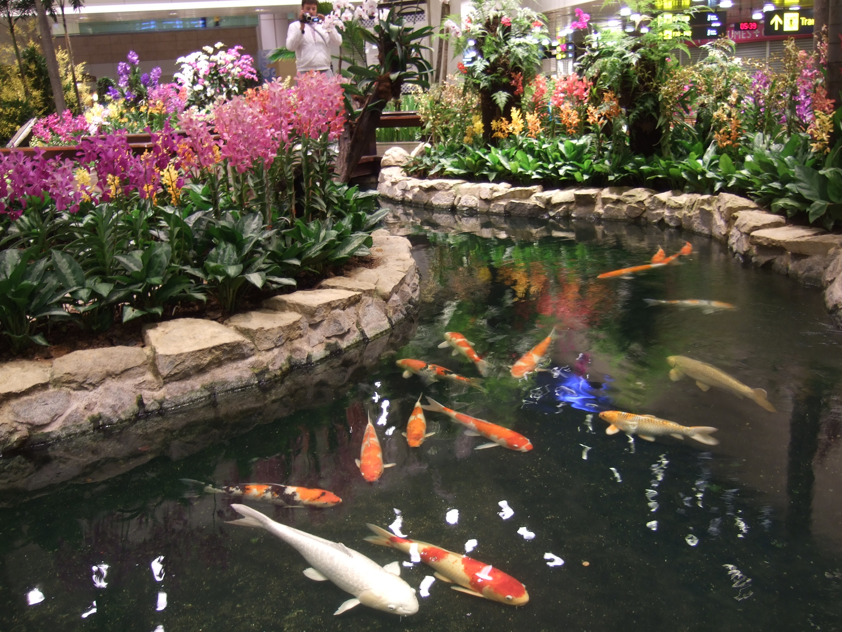Changi international airport airport in singapore for Koi pond quezon city