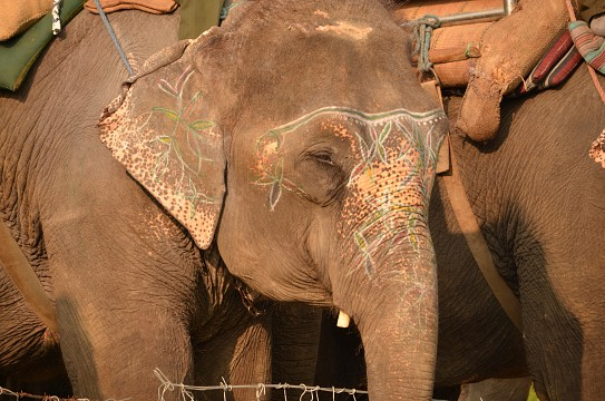 Elephant ride through Chitwan National