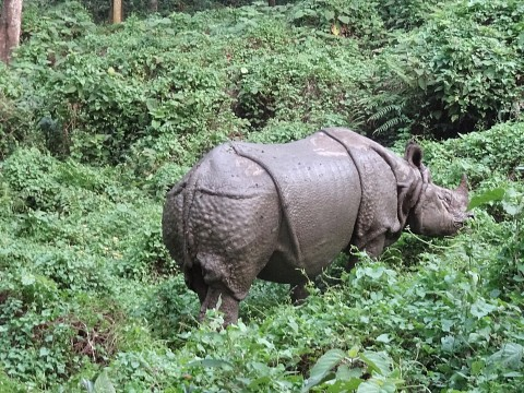 - Chitwan National Park