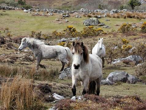 Connemara	ponies - Connemara National Park