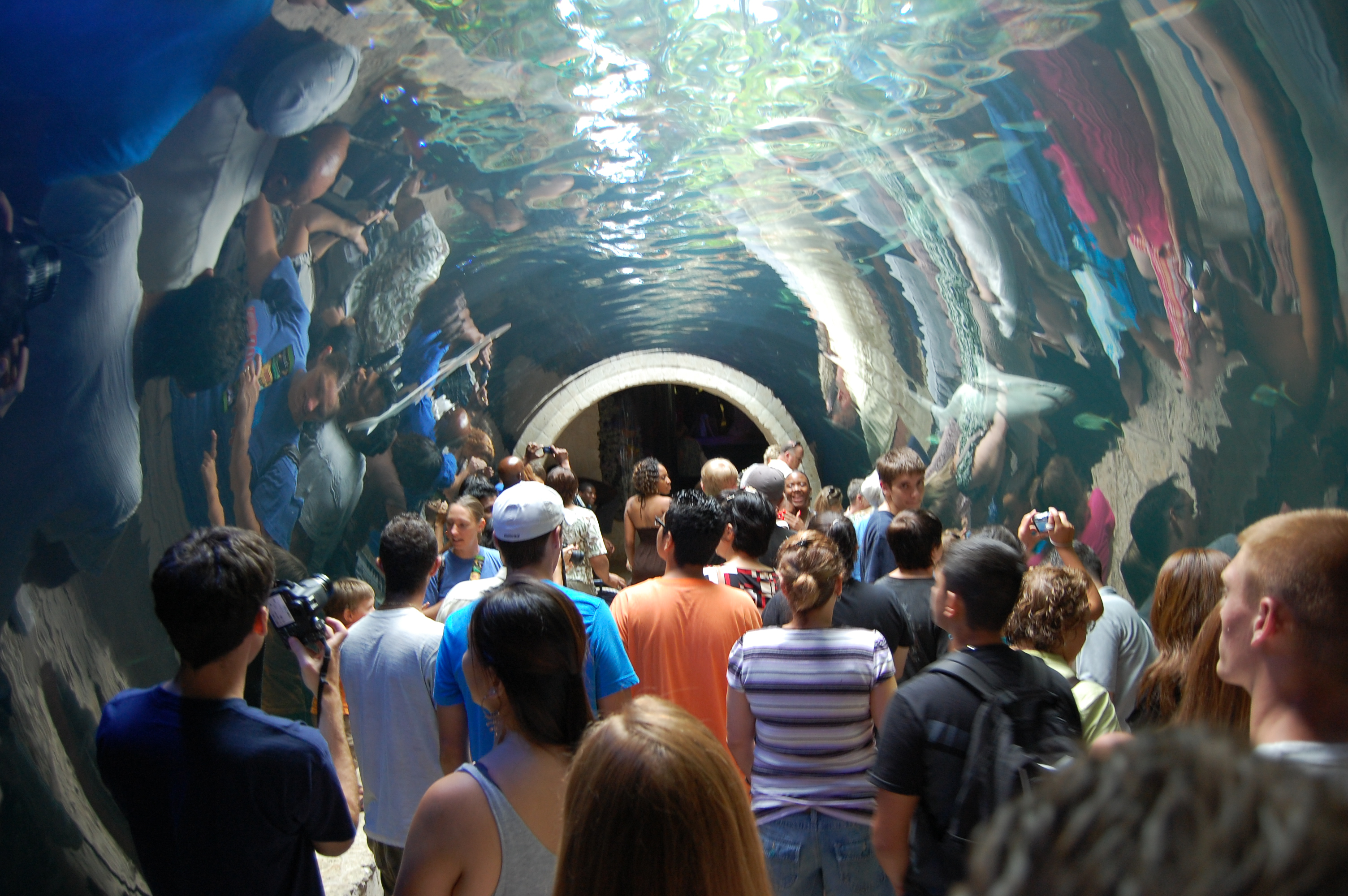 Dallas World Aquarium Aquarium in Dallas Thousand Wonders – Dallas Tx Tourist Attractions Map