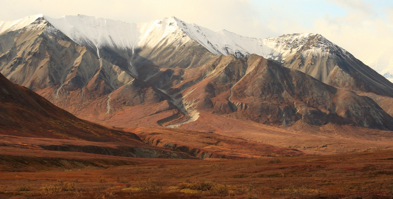Fall colors in Denali National Park, Alaska - Denali National Park and Preserve