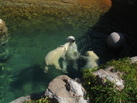 Polar