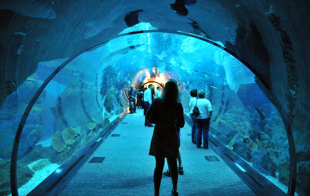 Walk into the sea - Dubai Aquarium