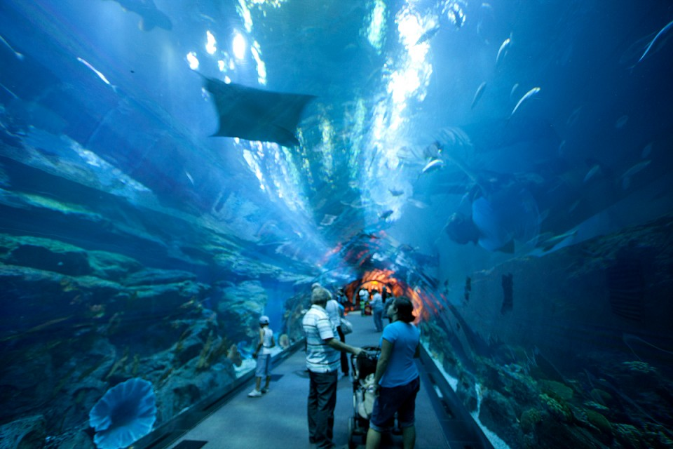 Dubai Aquarium   Aquarium in Dubai   Thousand Wonders