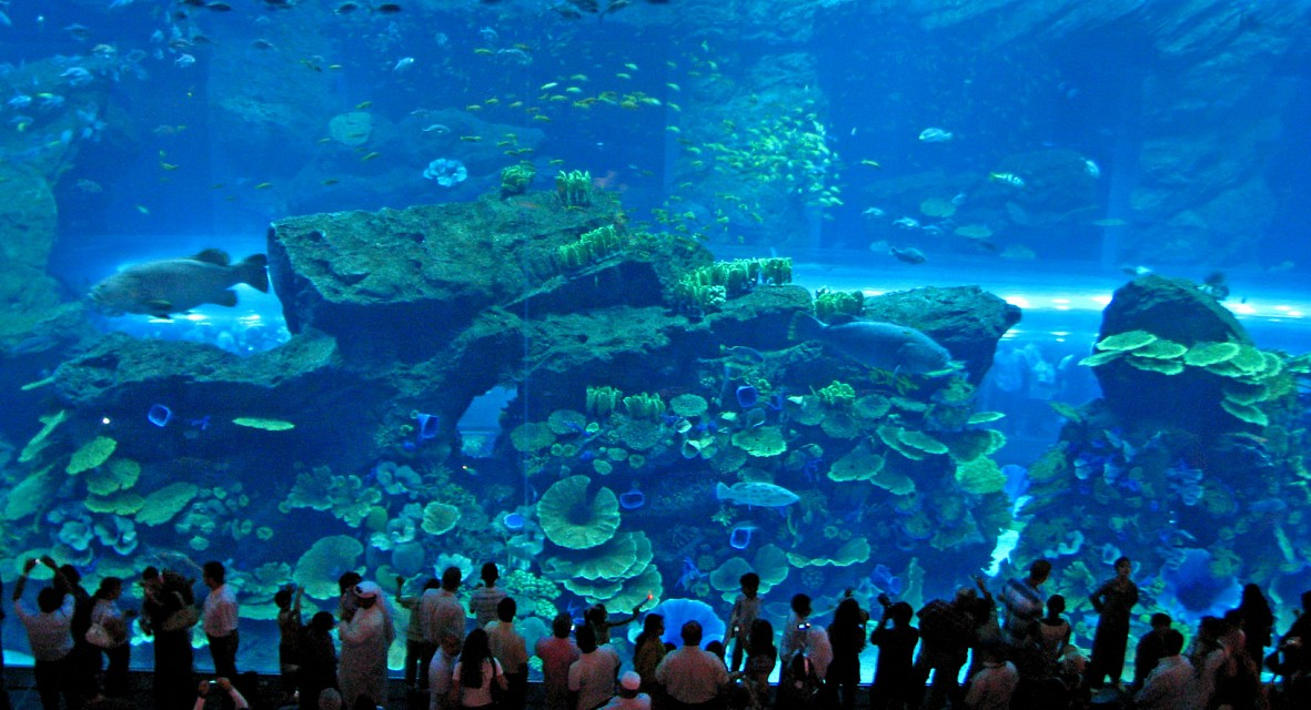 Dubai Mall Aquarium - Dubai Mall