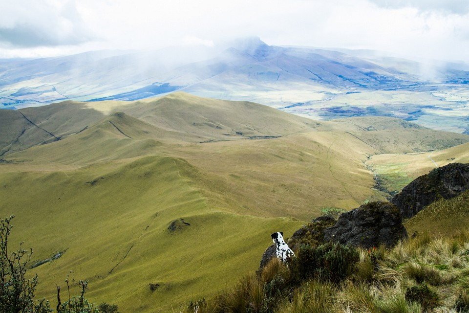 Dalmation overlooking the Ecuadorian Plains - From the top of Pasachoa (explored) - Ecuador