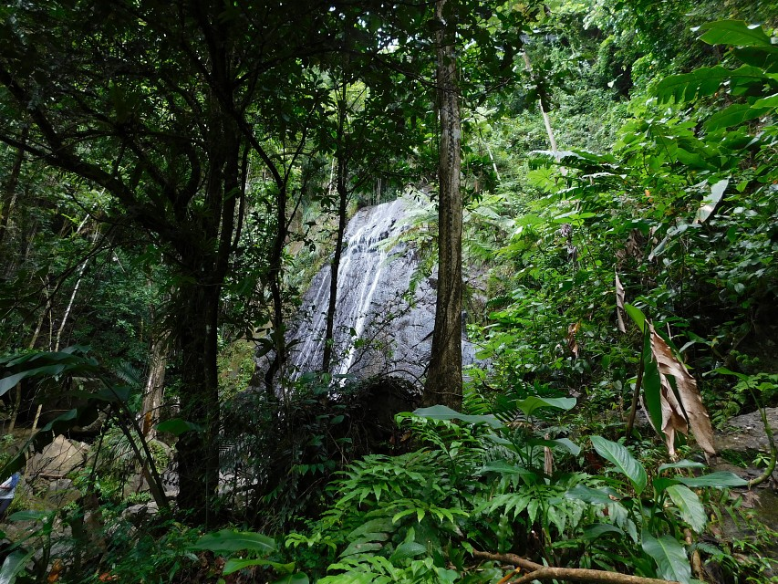 La Coca Falls - El Yunque National Forest