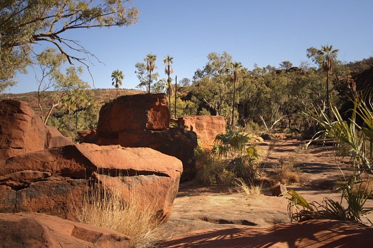 Red stones and palm trees - Finke