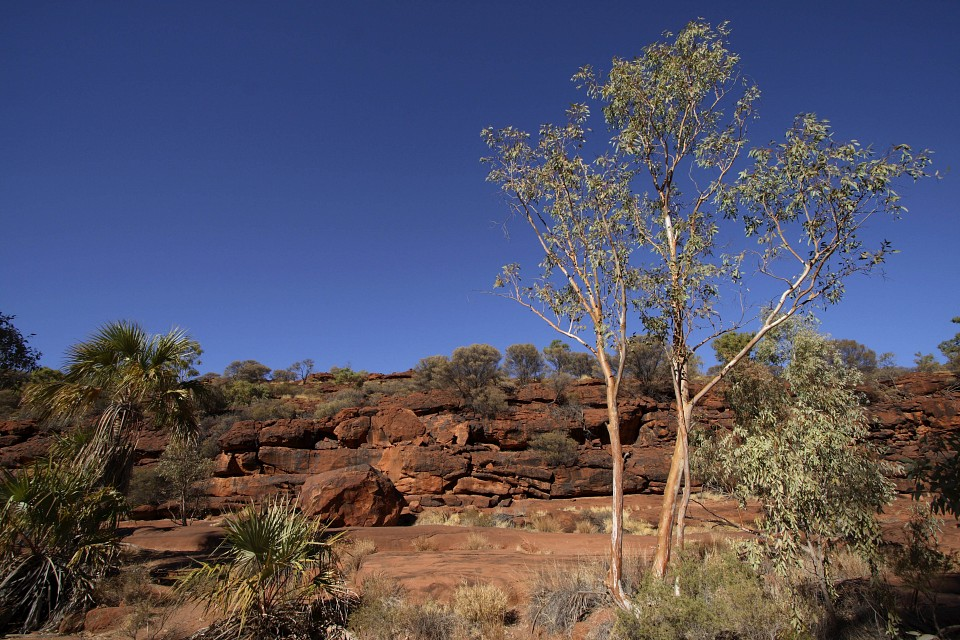 Landscap of the park - Finke Gorge National Park