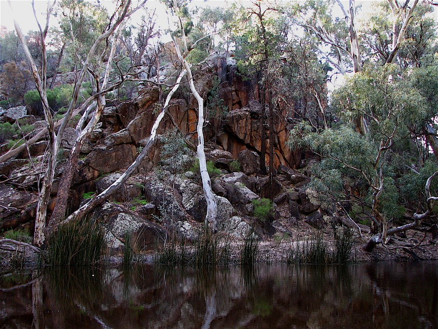 Wilpena Pound Billabong - Flinders Ranges National Park