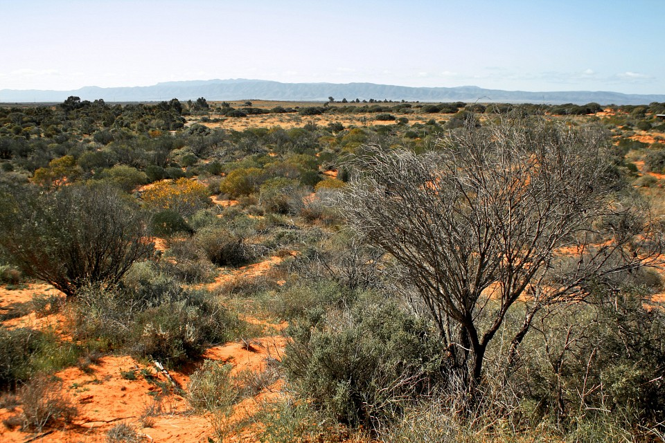 Flinders Ranges - Flinders Ranges National Park