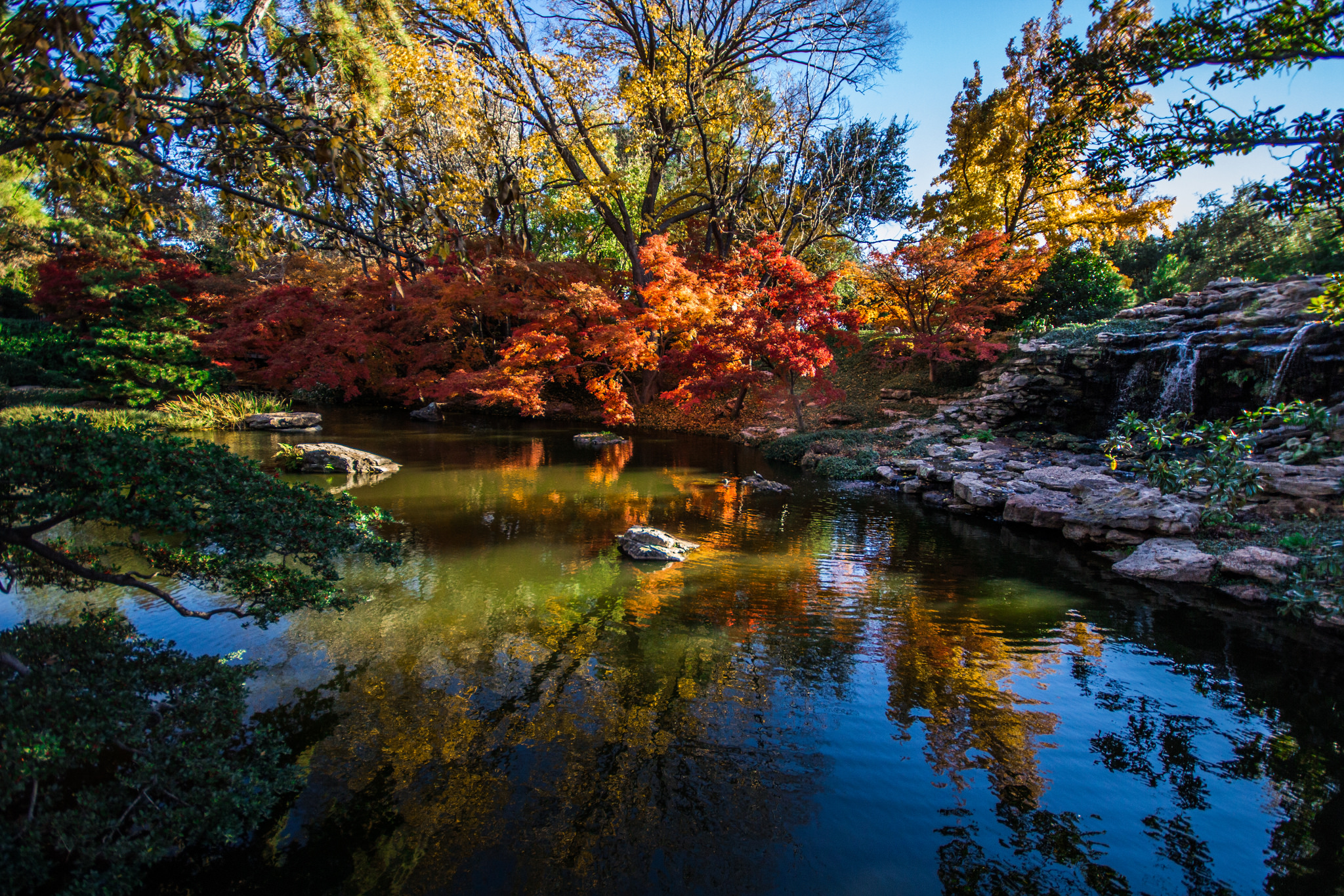 Japanese Gardens In Autumn   Fort Worth Botanic Garden.