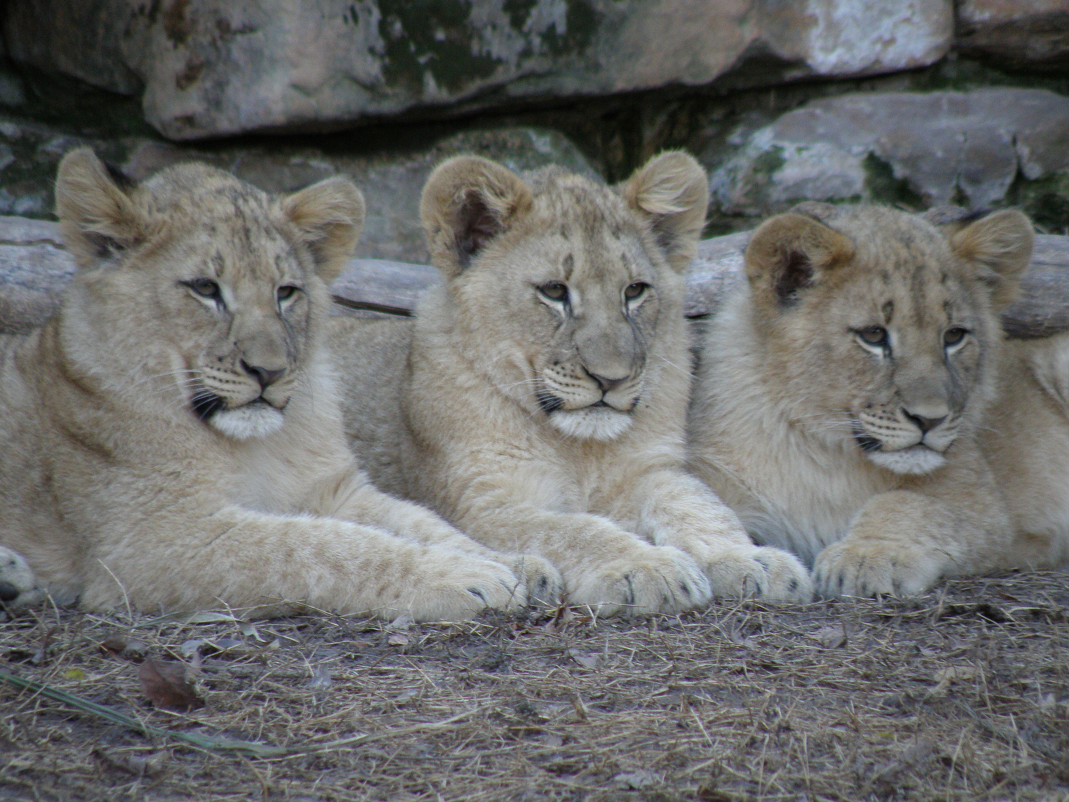 Fort Worth Zoo - Zoo in Fort Worth - Thousand Wonders