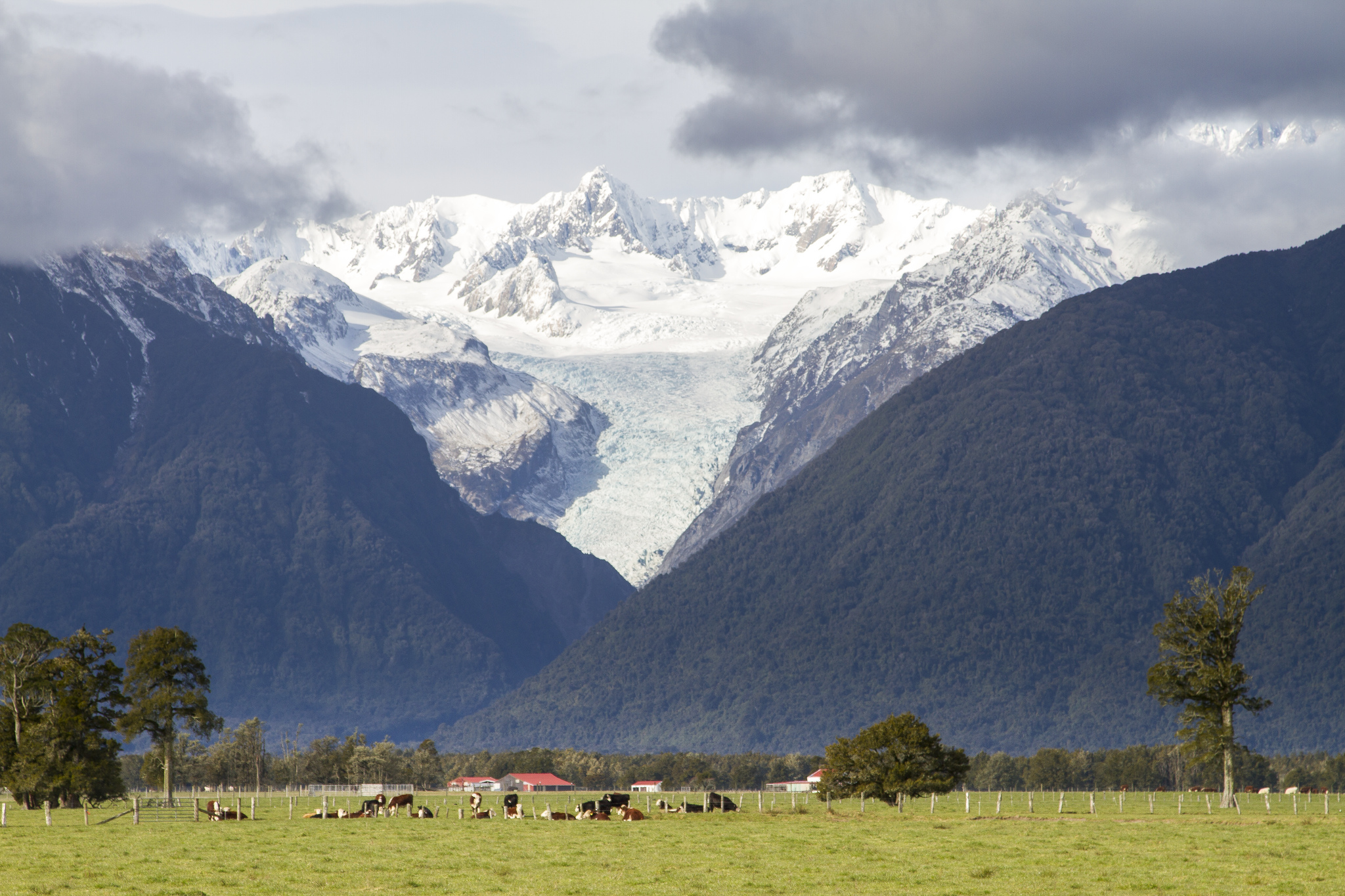 Image result for fox glacier new zealand