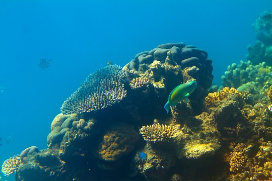 - Great Barrier