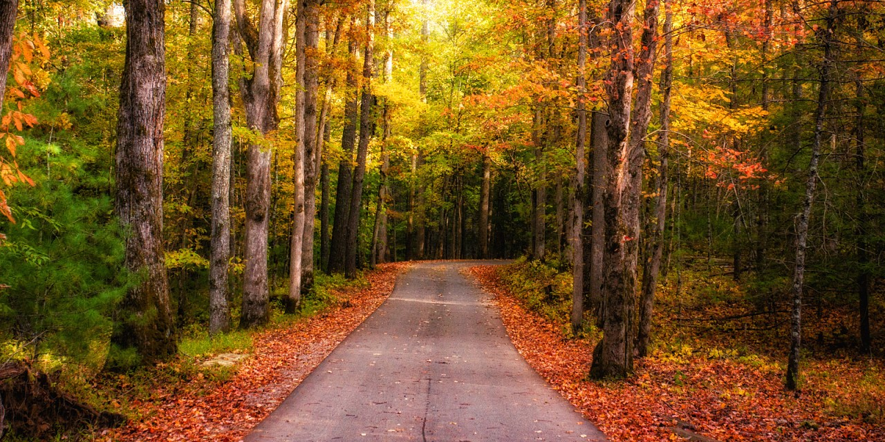 Fall Road Glow - Great Smoky Mountains National Park