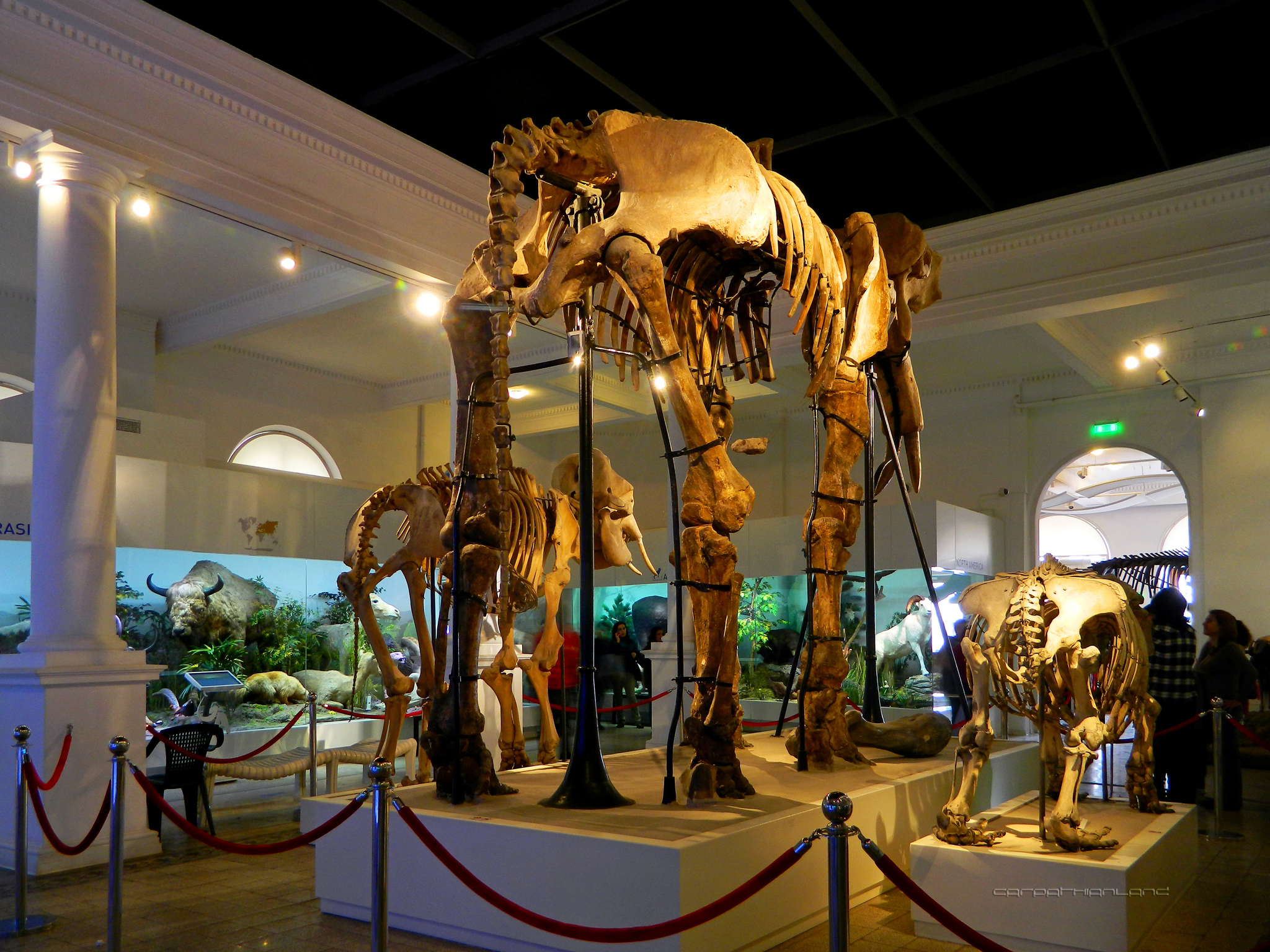 Florida Museum Of Natural History Exhibits