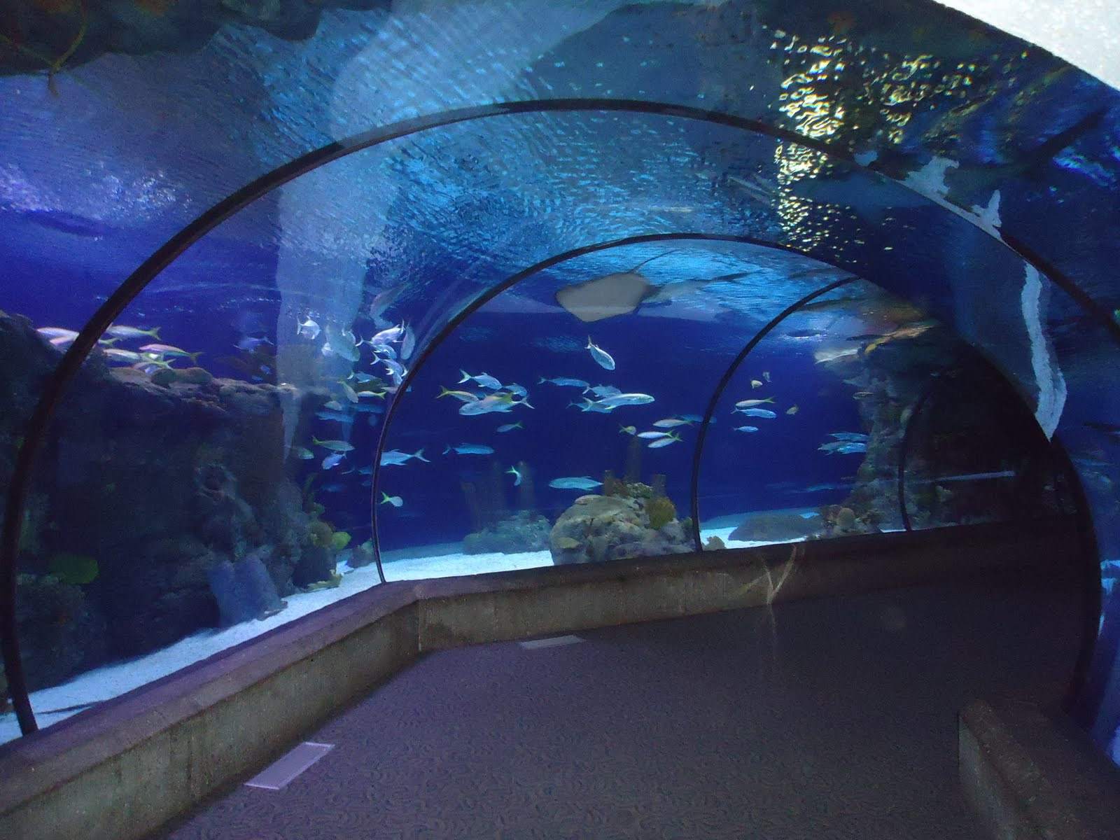 Henry Doorly Zoo And Aquarium Zoo In United States