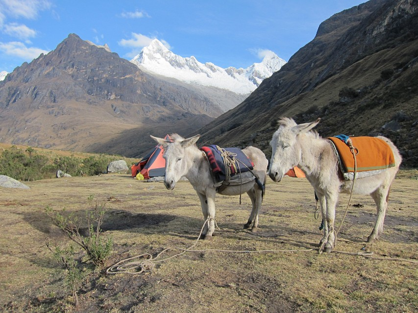 Mules/Donkeys - Huascarán National Park