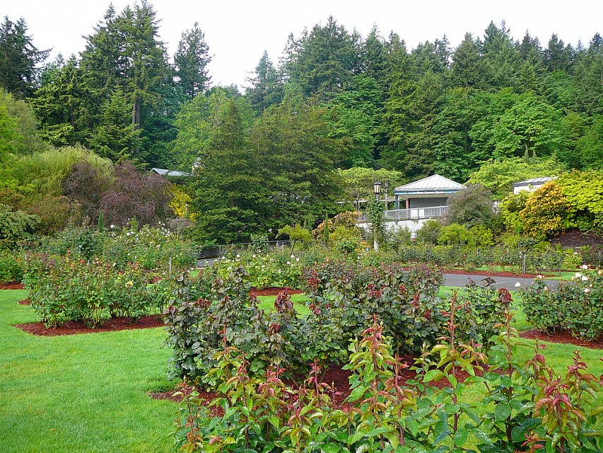 International Rose Test Garden - Urban Park in Portland - Thousand ...