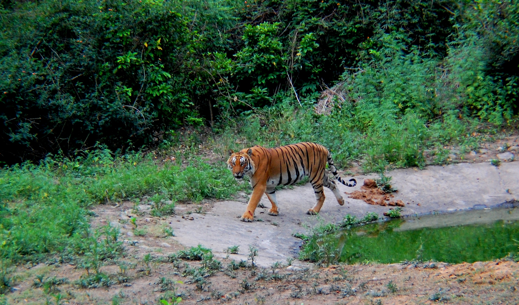 jim corbett national park Corbett national park: corbett national park, natural area in southern uttarakhand state, northern india it was established as hailey national park in 1936 and was.