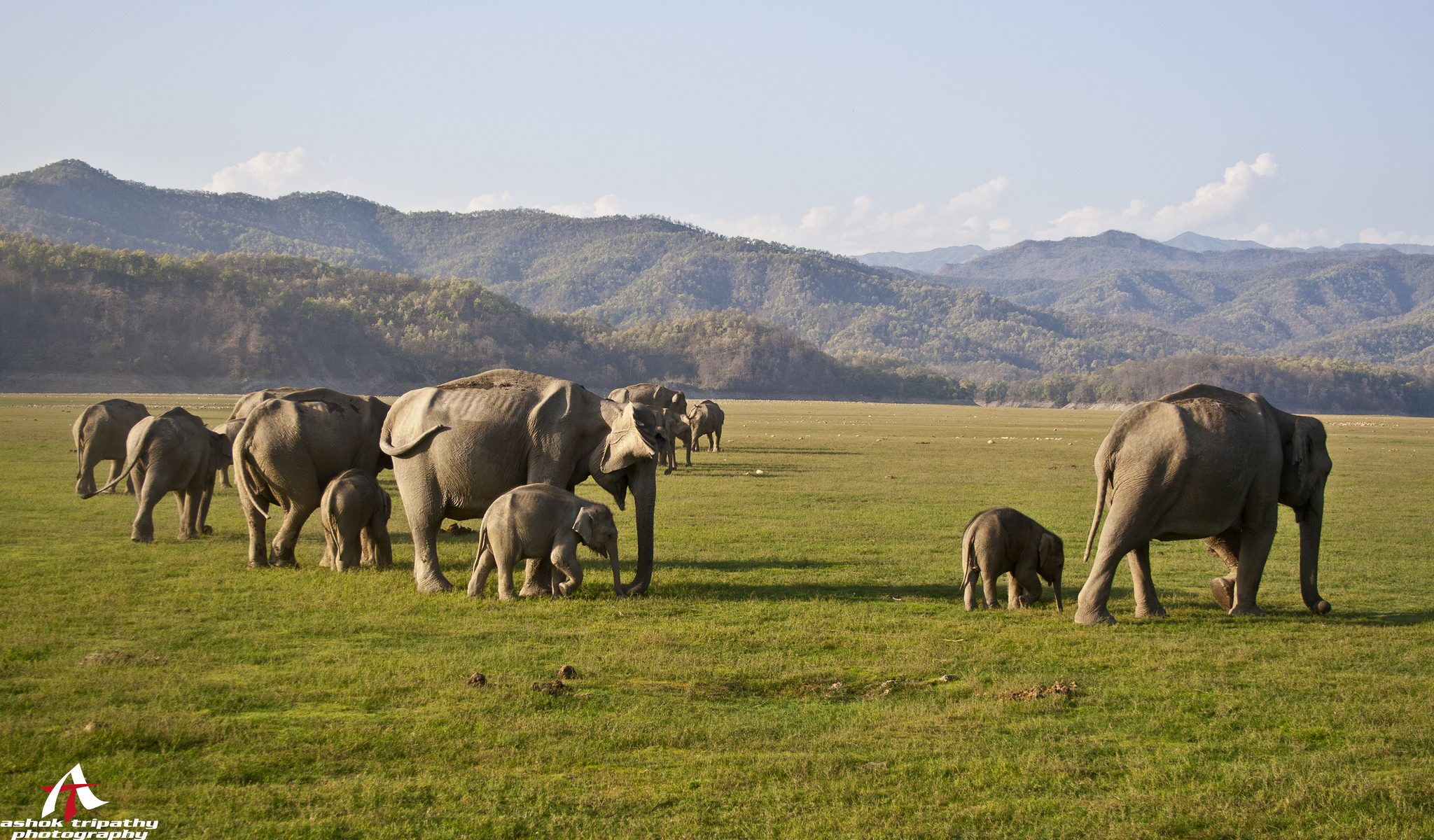 Elephant Lovers Nature Park