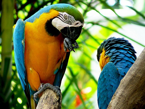 A pair of Blue and