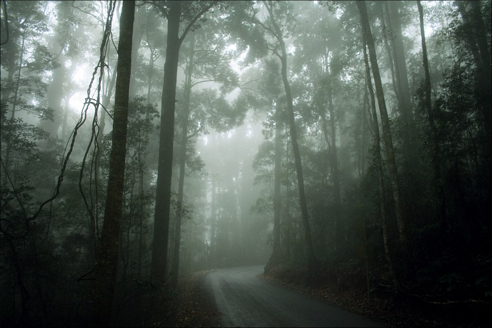 misty forest road - Lamington National Park