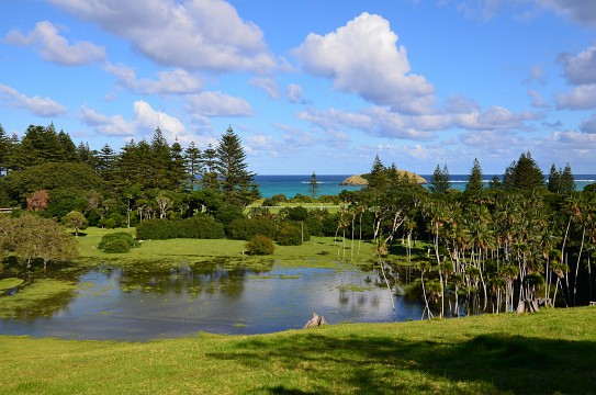 Kentia palms and