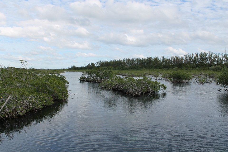 More mangroves. - Lucayan National Park