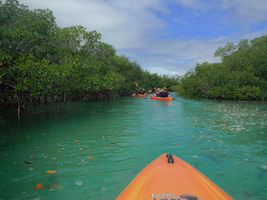 Kayak Tour of Mangroves, Lucayan National Park. - Lucayan National Park