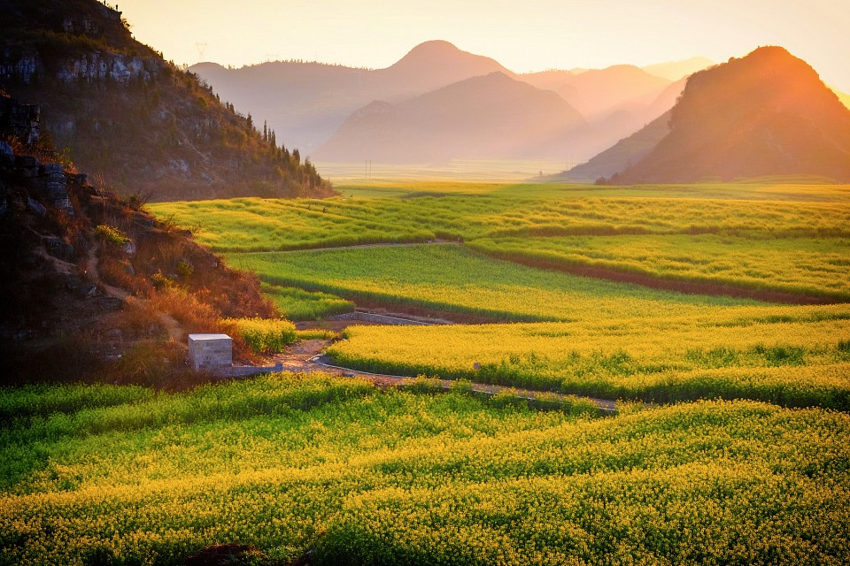 luoping - rice field in yunnan