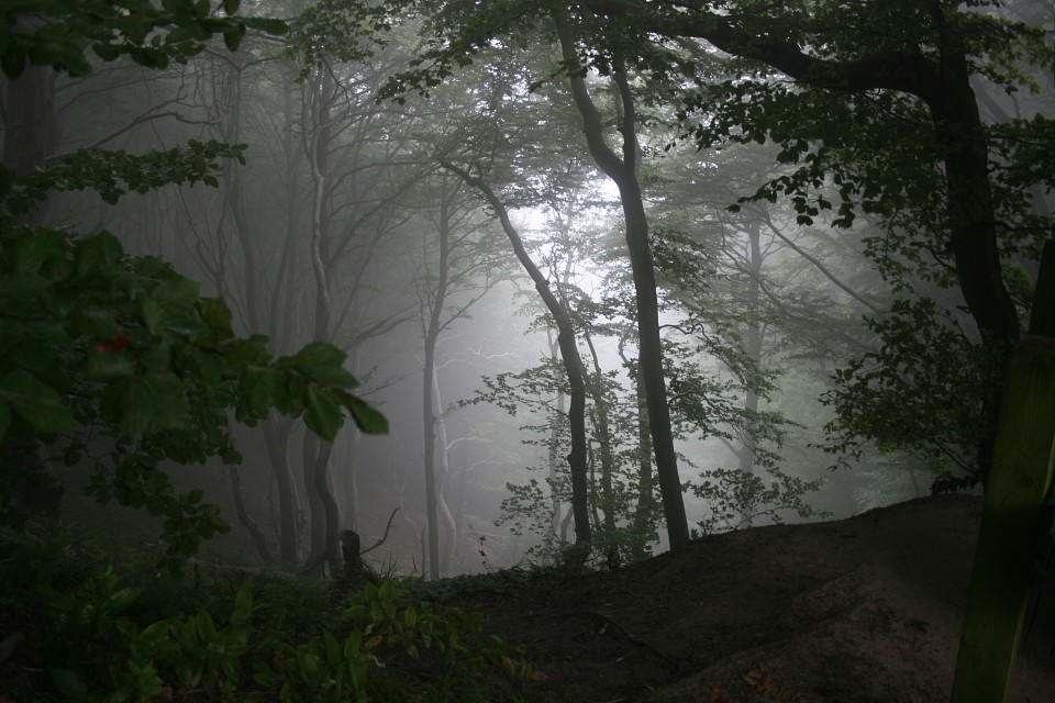 Forest in the fog - Møns Klint
