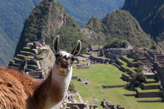 Hola,