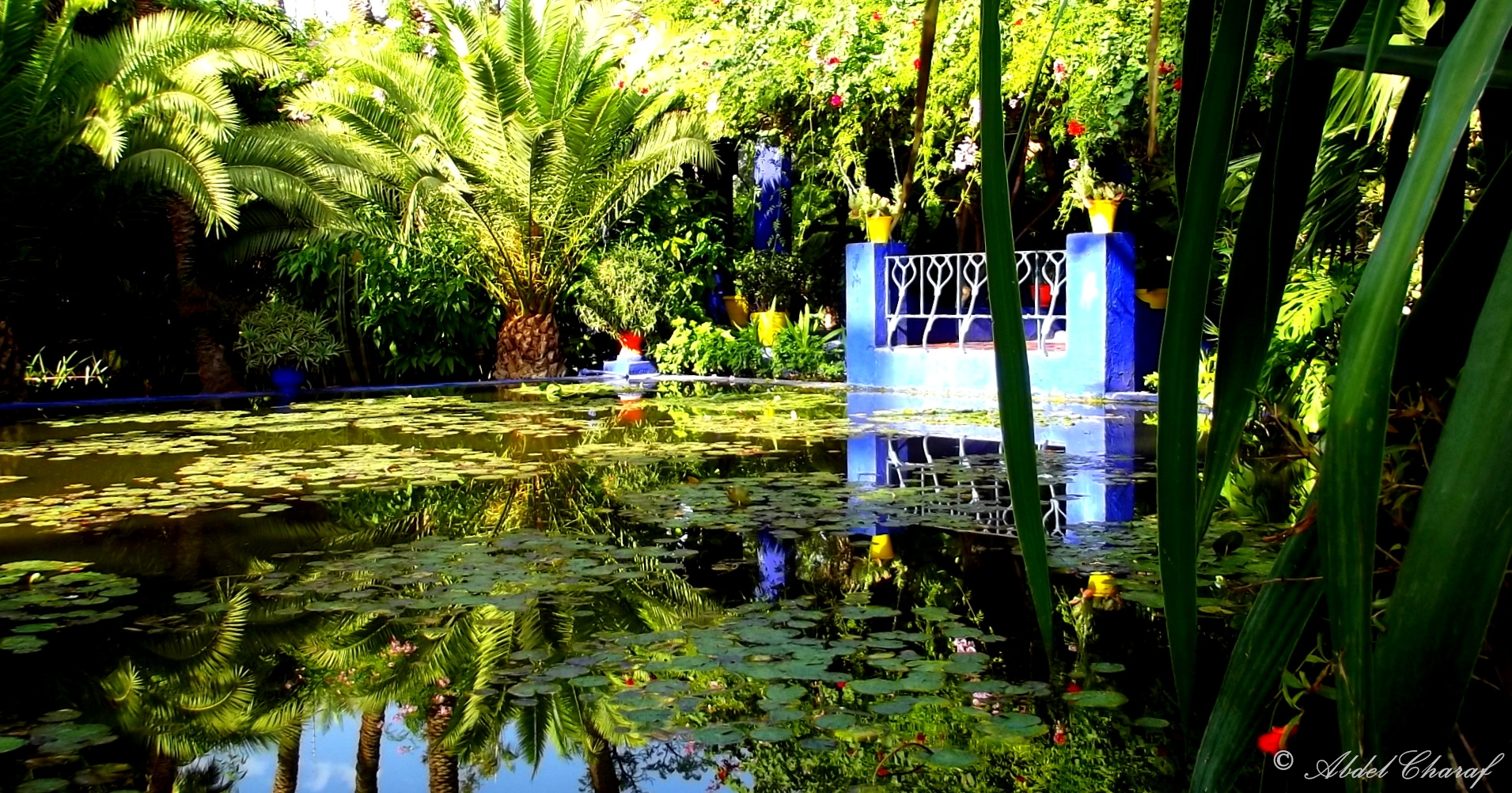 Majorelle garden botanic garden in marrakesh thousand for Jardin majorelle