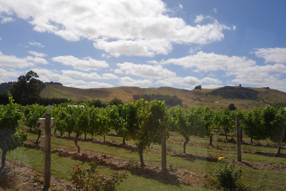 More Vinyards - Martinborough