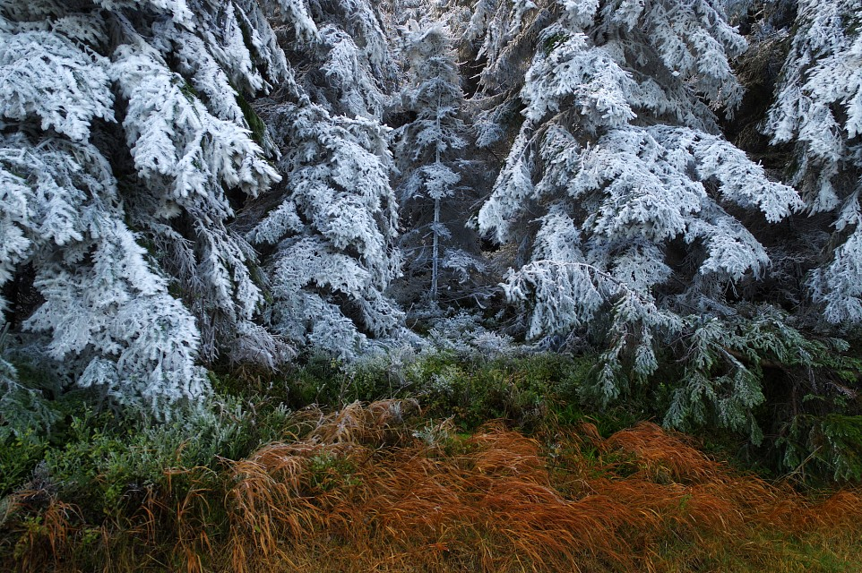 White frost at Kostelky - Moravian-Silesian Beskids